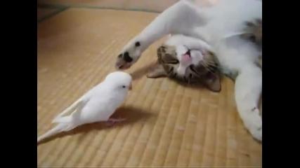 Котка срещу дразнеща птичка - много весело