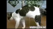 Изобретение на китайците - котешки марш!!!