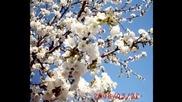 Пролет - Петя Дубарова - Петя Буюклиева