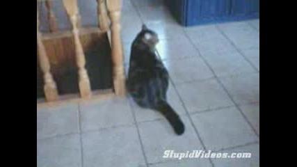 Котка Бърше Под