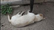 Слонче се опитва да събуди дълбоко спящо куче , смях