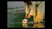 Мъж Ходи По Вода - Скрита Камера