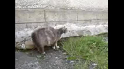 Котка Бие Куче До Спукване