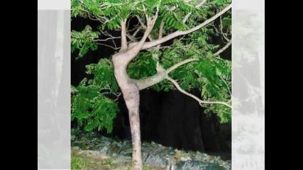 Смешни снимки на растения (смях) Гледаите!!!
