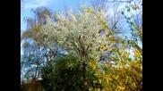 Очакване За Пролет
