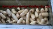 Lotus Root Cleaning and Peeling Machine, Vegetable Peeling