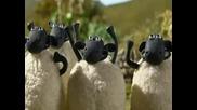 Shaun The Sheep Epizod 1