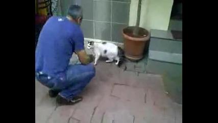 ули4на котка напада ку4е