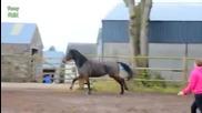 Най-смешните клипове на коне, компликация (new)