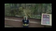 Лъвица се опитва да изяде бебе