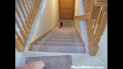 Това куче ще ви пръсне от смях