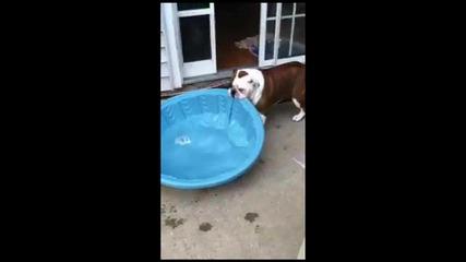Куче се опитва да си инсталира басейна вкъщи