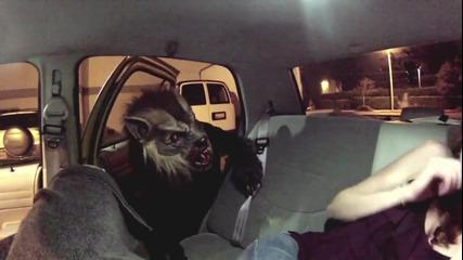 Върколак в таксито-брутална шега
