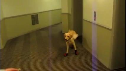 Забавно куче 10000% смях