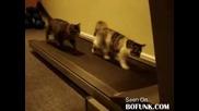 И котките искат да са във форма