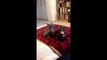Танцуващи Котета