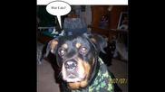 Смешни Кучета И Котета