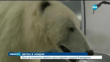 Бяла мечка се качи в столичното метро