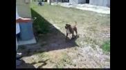 Скачащо Куче