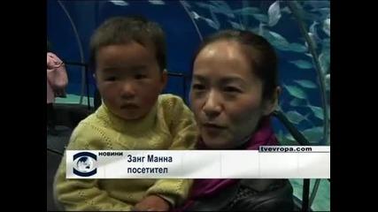 Дядо Коледа поплува в аквариума в Шанхай