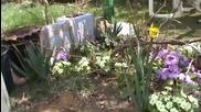 Разцъфте ли се цветя в село Горна Диканя - 3
