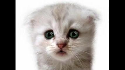 Много Сладко Коте Пее