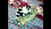 Маша и Боби се гушкат