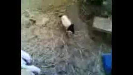 Маскирана Овца - Дявол