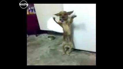 Кучешко Хоро... голям смях!!!