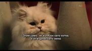 Г-ца Минус - филм с много котки в главните роли - (1 от 3)