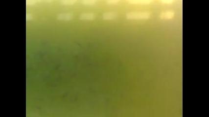 Рибите на Гребната База Ядът Плюнки
