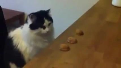 Котка експерт