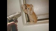 Смешни Снимки на Кучета и Котки