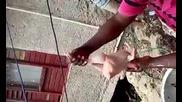 Така се скубят кокошки в Африка!
