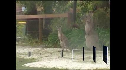 Пролетен сняг изненада Австралия