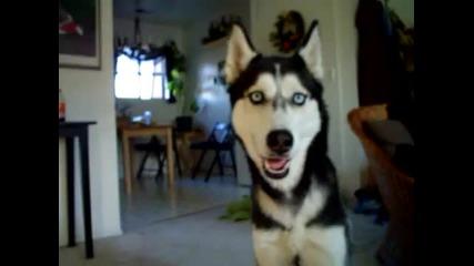 Говорещото куче - Мишка
