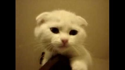 Най - сладкото котенце на света !