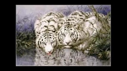 Beli tigri