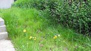 Абитуриентски бал и озеленяване на градина