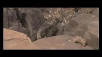 Бушмените как намират вода