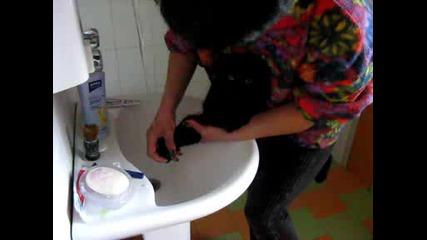 котките не се къпели