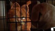 Garfield / Гарфилд (2004) Целия Филм с Бг Аудио