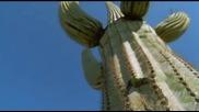 Как кактусите оцеляват без вода