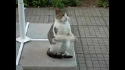 Молеща Се Котка
