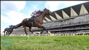 Trip To Paris Wins Gold Cup at Ascot