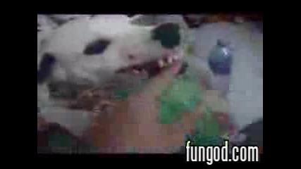 Кучето Си Пази Бирата