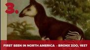 7 Изчезнали животни, които са преоткрити
