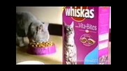 Fun Whiskas Реклама