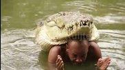 Приятелство между човек и крокодил - Възможно ли е