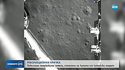 Покълнаха памуковите семена, отнесени на Луната от китайски апарат